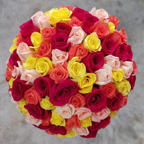 100 rainbow roses top