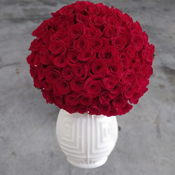 100 red roses front