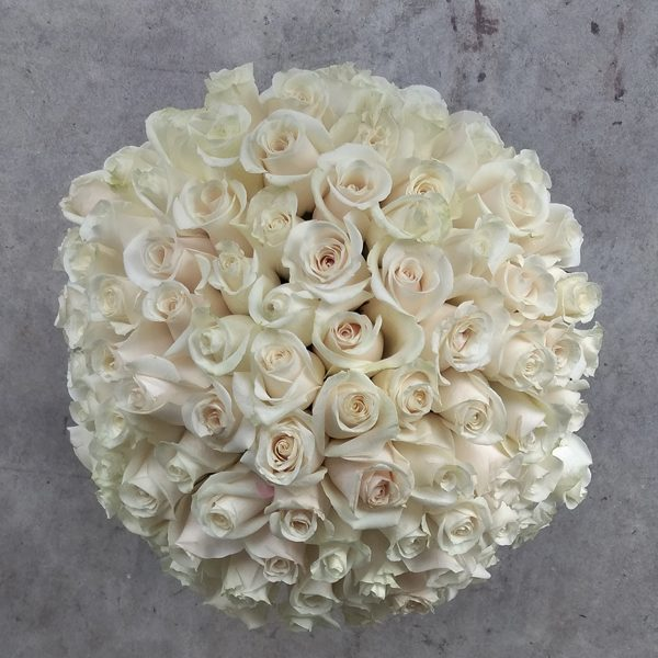 100 white roses top